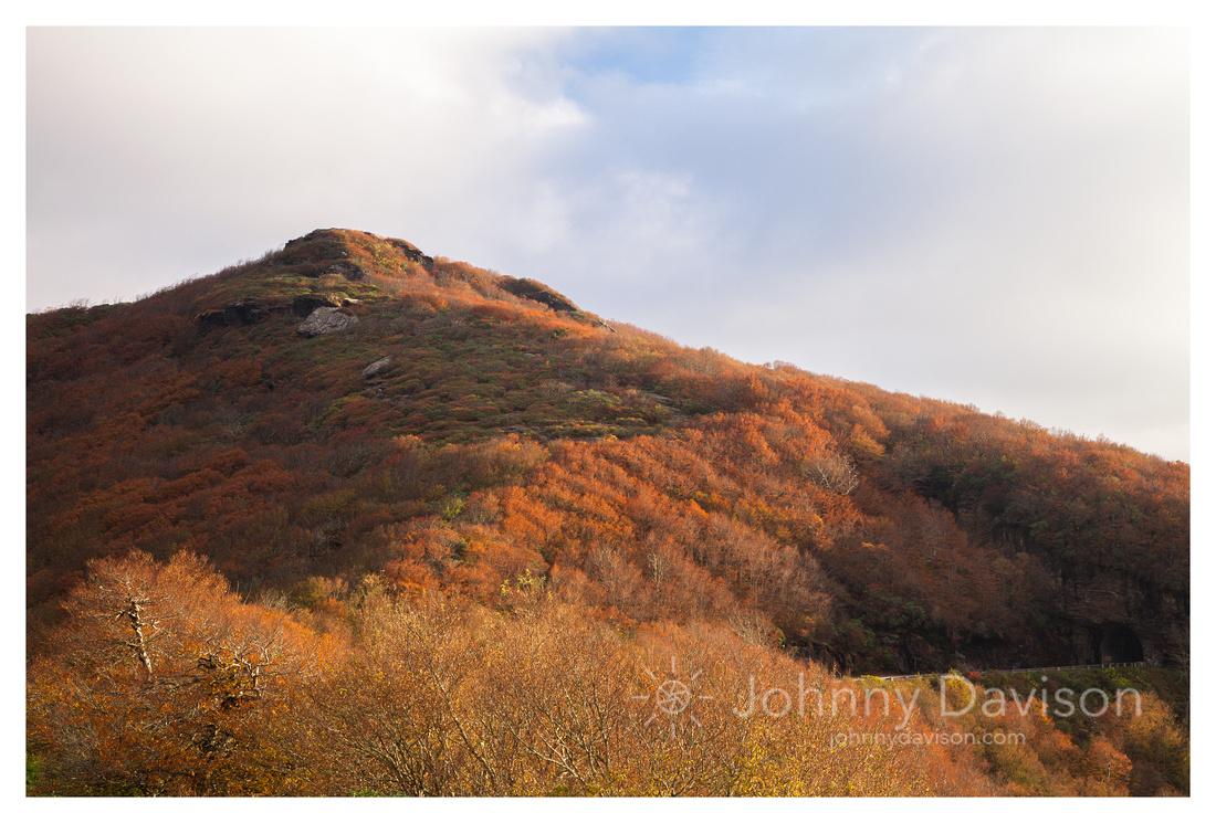 Fall Color, Morning, Craggy Gardens, Blue Ridge Parkway, NC