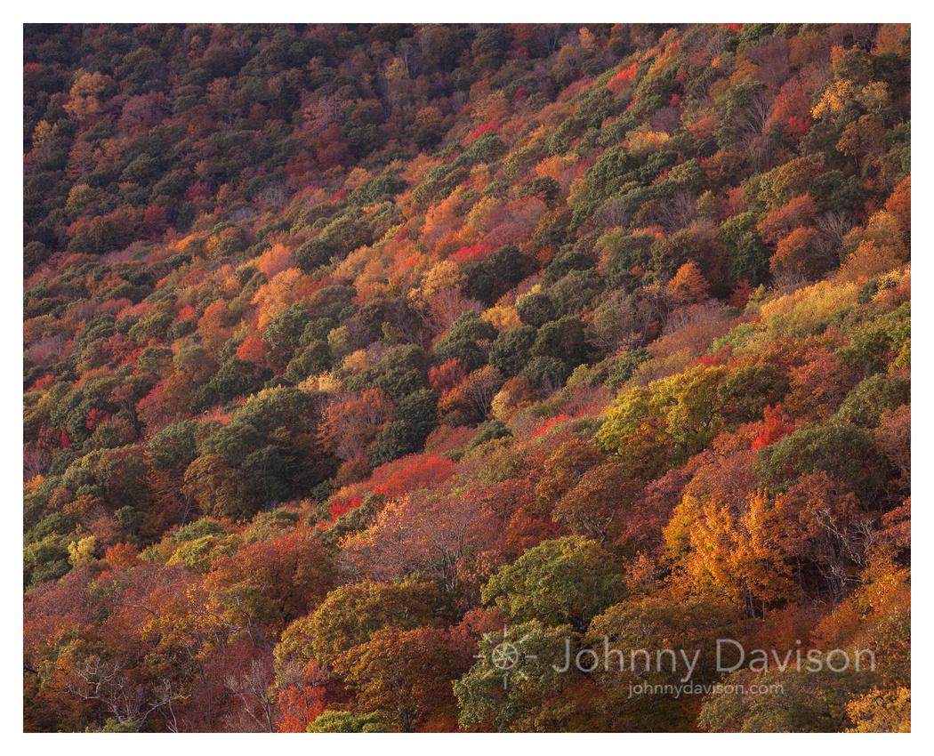 Fall Color Detail, Blue Ridge Parkway, NC