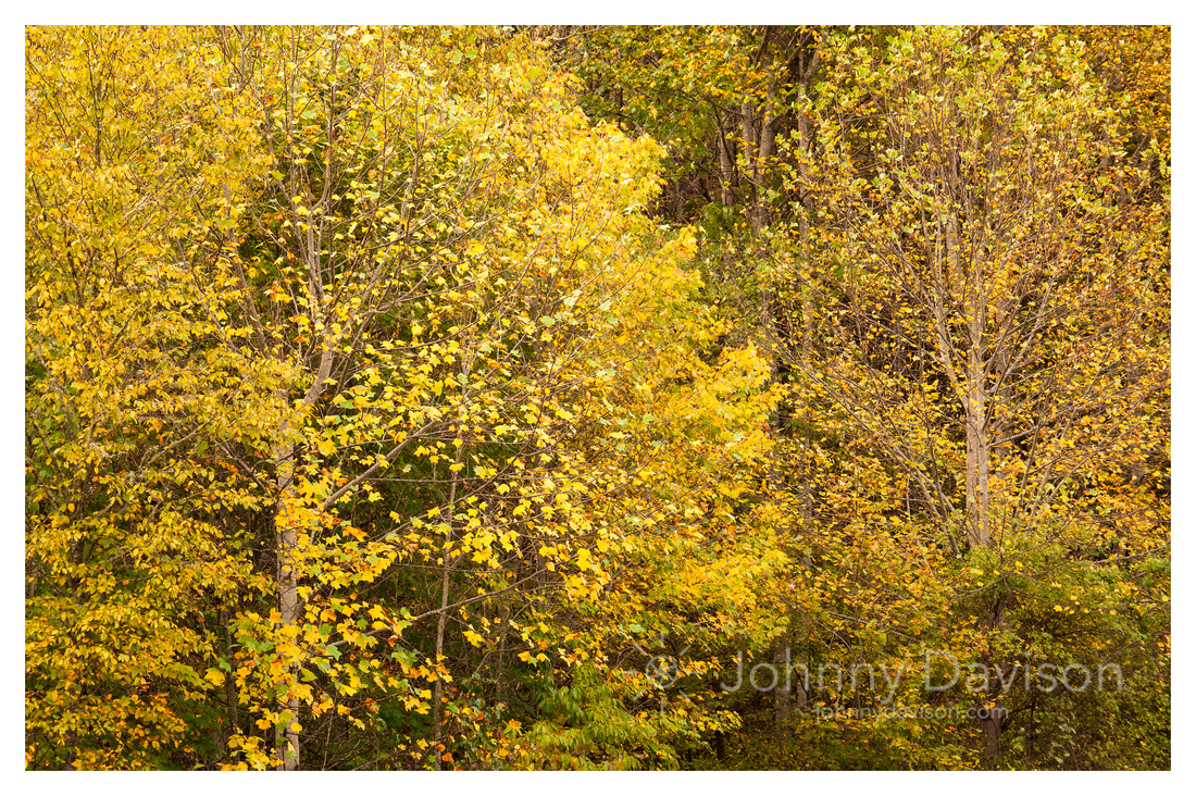 Fall Color Detail, Nantahala National Forest, NC