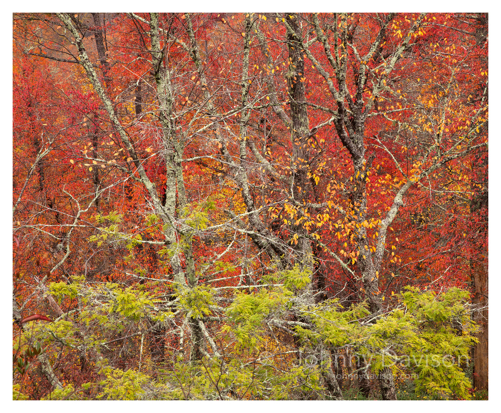 Fall Color Detail, Linville Gorge Wilderness Area, Pisgah National Forest, NC