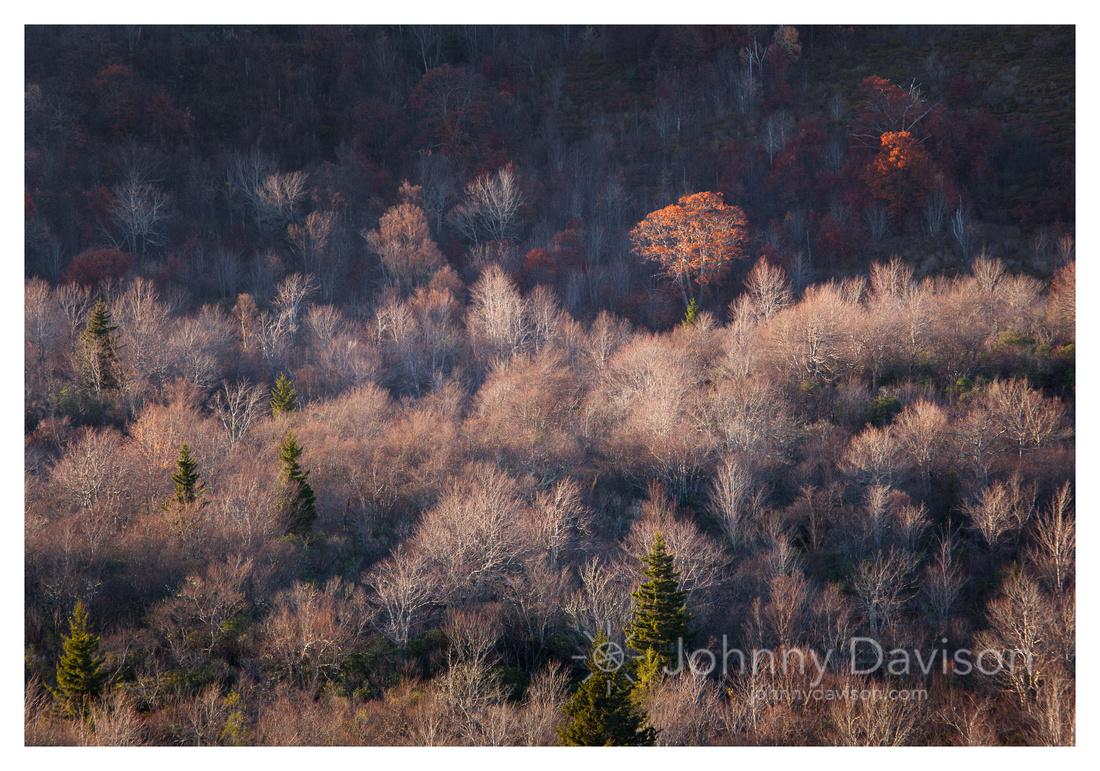 Fall Color, Evening Light, Graveyard Fields, Blue Ridge Parkway, NC