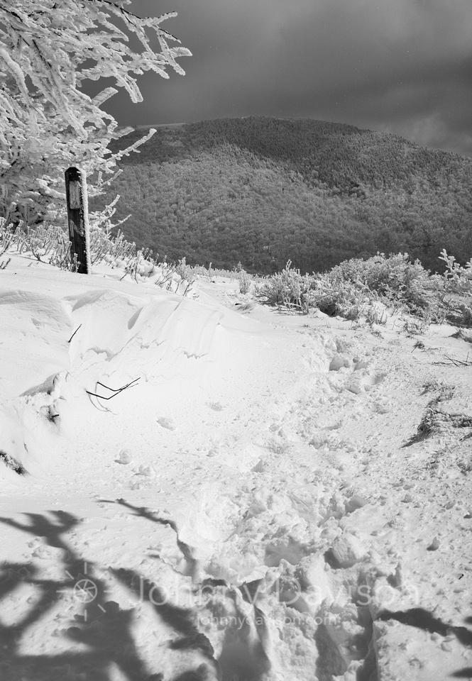 Grassy Ridge Bald, App Trail, Roan Mountain, Pisgah/Cherokee National Forest, NC/TN