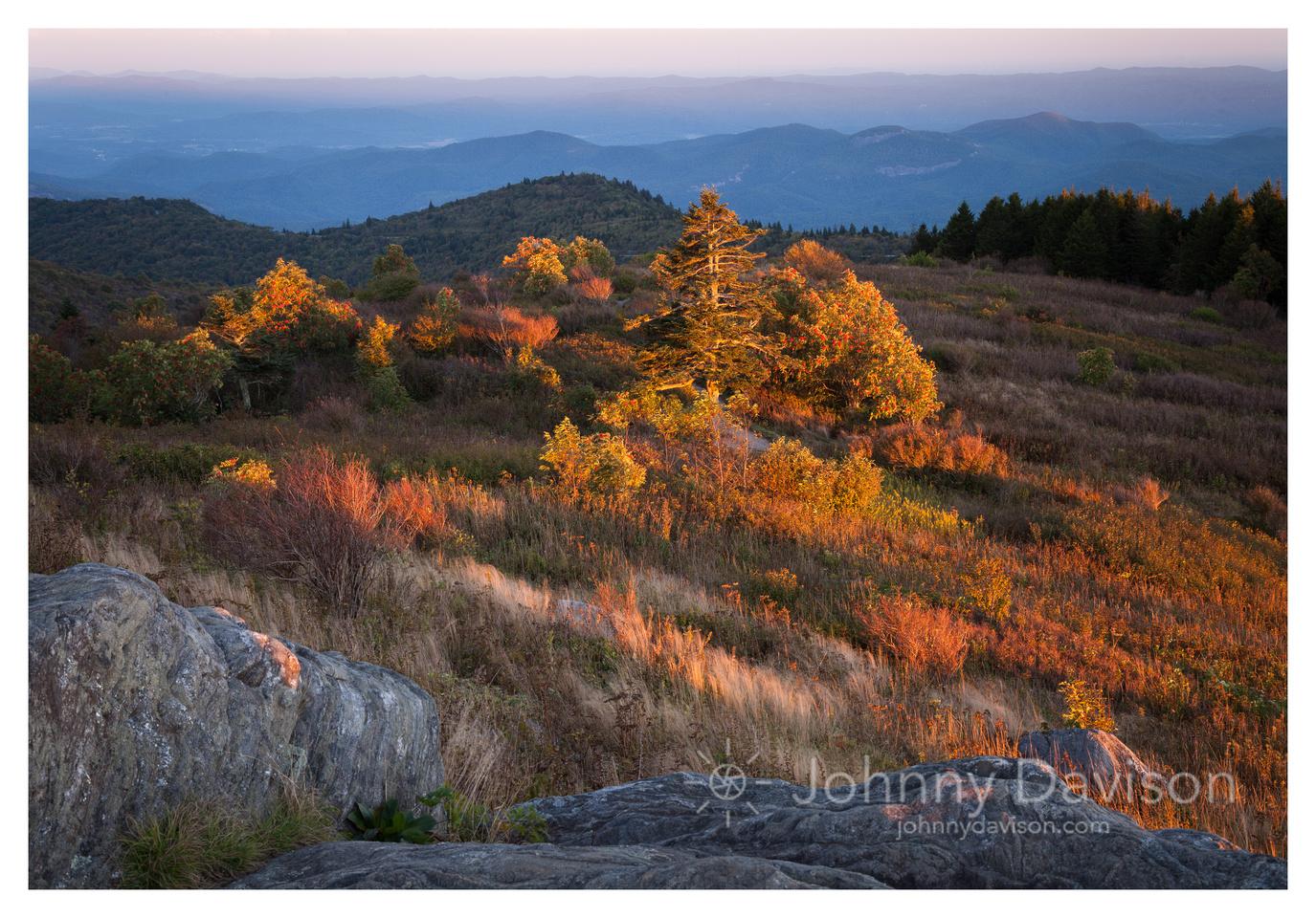 Foliage, Evening Light, Black Balsam Knob, Blue Ridge Parkway, NC
