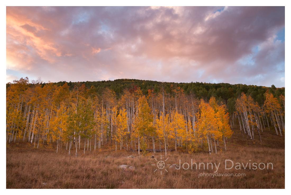 Aspens, Sunset, White River National Forest, CO