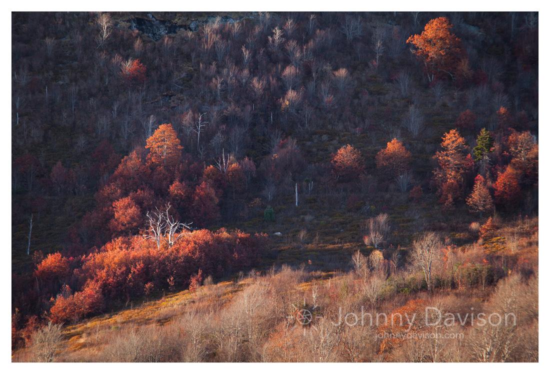 Graveyard Fields, Fall Color, Blue Ridge Parkway, NC