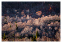 Fall Color, Evening Light, Graveyard Fields, Blue Ridge Parkway, NC