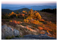 Foliage, Evening Light, Black Balsam Knob, Blue Ridge Parkway, NC