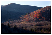 Fall Color Cluster, Evening, Graveyard Fields, Blue Ridge Parkway, NC
