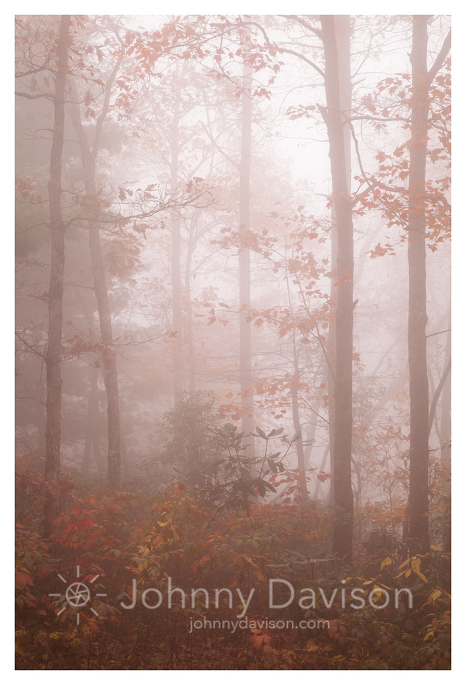 Mist, Fall Foliage, Linville Gorge Wilderness Area, Pisgah National Forest, NC