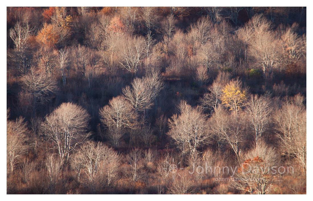 Leafless Trees, Fall, Evening, Graveyard Fields, Blue Ridge Parkway, NC