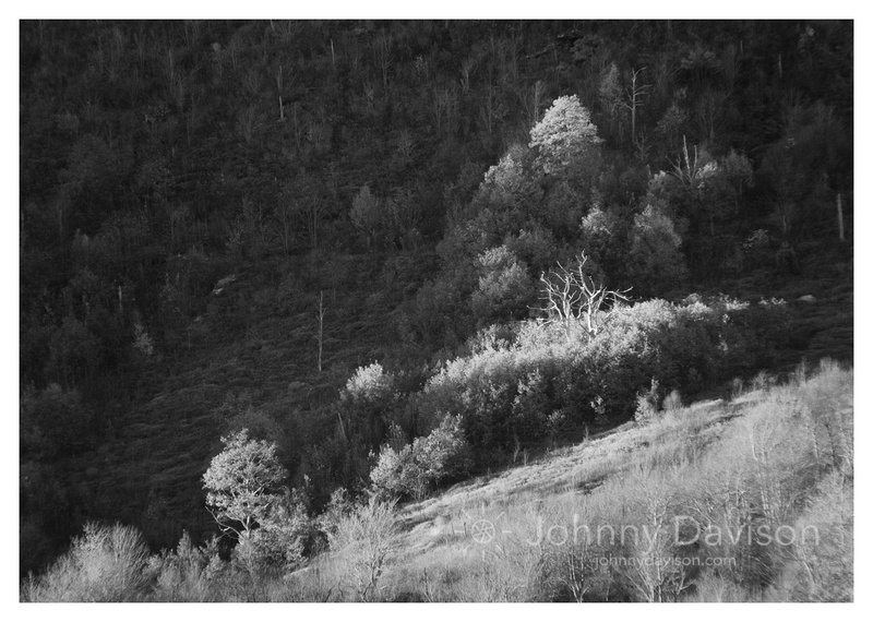 Dead Tree, Fall Foliage, Evening, Graveyard Fields, Blue Ridge Parkway, NC