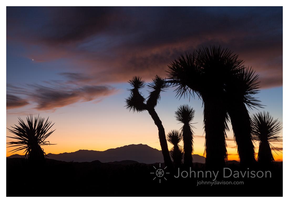 Desert Plants Sillhouette, Sunset, on Ryan Mountain, Joshua Tree National Park, CA