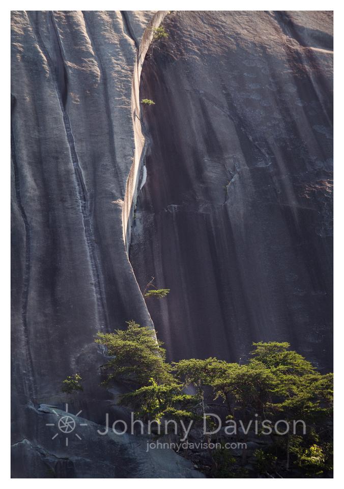 Tree, Crack, Stone Mountain, Morning, Stone Mountain State Park, NC