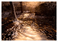 Evening Light, Rime Ice, Bearwallow Mountain, NC