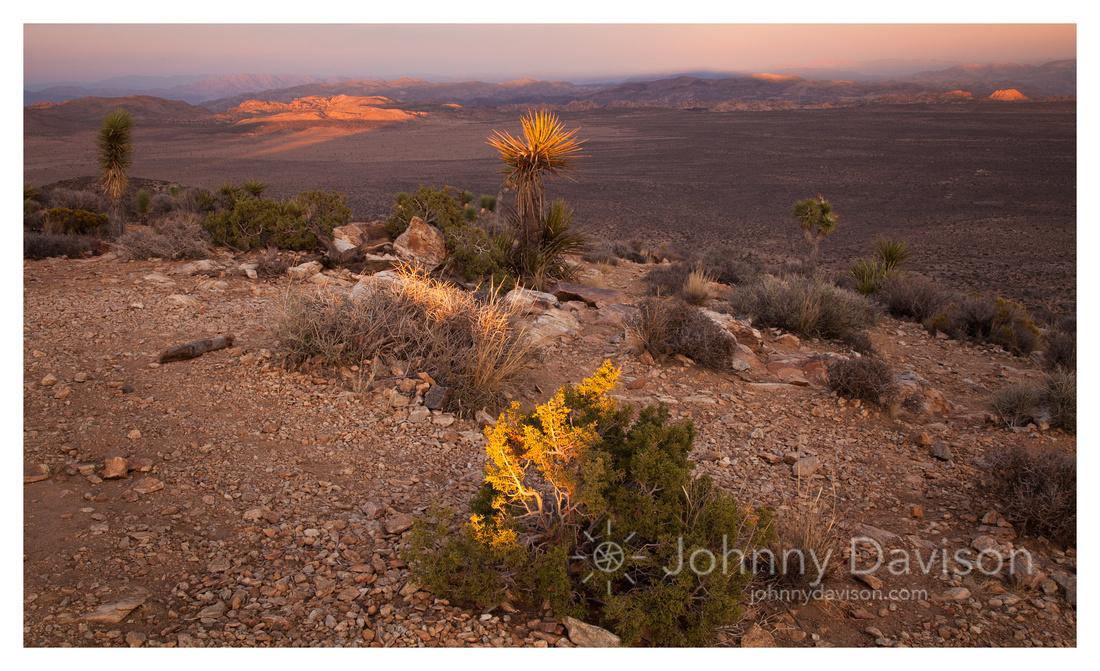 Desert Plants, Sunset, on Ryan Mountain, Joshua Tree National Park, CA