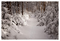 Snow-draped Forest, Afternoon Light, Roan High Knob, Roan Mountain, Pisgah/Cherokee National Forest, NC/TN
